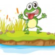 A frog and a water — Vector de stock