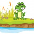 Stock Vector: A frog and a water