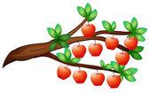 Apples — Stock Vector