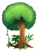 A tree — Stock Vector