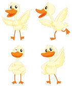 Ducks — Stock Vector
