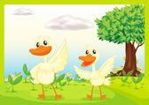 Ducks in nature — Stock Vector