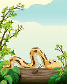 A snake on tree — Stock Vector