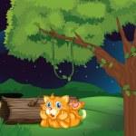 オレンジ色の猫 — ストックベクタ