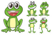 Frogs — Stock Vector