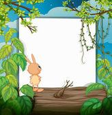 Кролик и белая доска — Cтоковый вектор