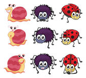 A spider, a ladybug and a snail — Stock Vector