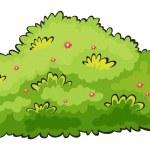 Green bush — Stock Vector