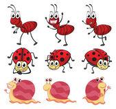 A snail, a ladybug and an ant — Stock Vector