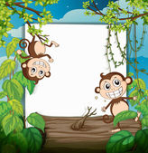 Monkeys and white board — Stock Vector