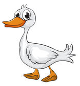 A duck — Stock Vector