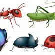 Various insects and bugs — Stock Vector