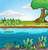 Land and aquatic environment — Stock Vector