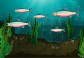 A school of fish — Stock Vector