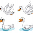 Four ducks — Stock Vector