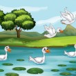 Ducks and water — Stock Vector
