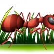 Stock Vector: Ant