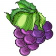 Stock Vector: Luscious grape