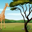 A giraffe - Stock Vector