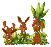 Three rabbits — Stock Vector