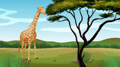 A giraffe — Stock Vector