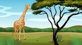 A giraffe — Stock Vector