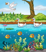 Swans and fishes — Stock Vector