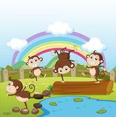 Monkeys and a rainbow — Stock Vector