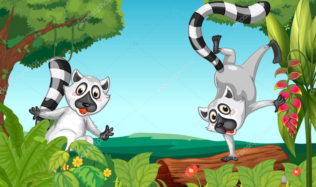 Lemuri nella giungla — vettoriali stock interactimages