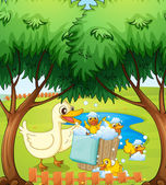 A smiling duck and duckling — Stock Vector