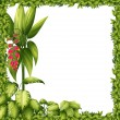 Royalty-Free Stock : A green frame with a flower