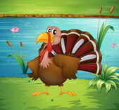 A turkey near the pond — Stock Vector