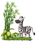 A zebra near the bamboo grass — Stock Vector
