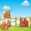 Squirrels at the garden — Stock Vector