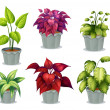 Six non-flowering plants - Stock Vector
