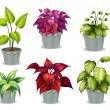 Six non-flowering plants — Stock Vector
