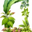 Leafy plants — Stock Vector