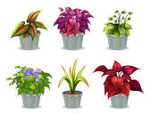 Six different plants — Stock Vector