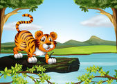 A trunk of a tree floating in the river with a tiger — Stock Vector