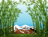 A bamboo forest and the snowy mountain — Stock Vector