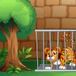 A tiger in a cage - Stock Vector