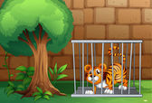A tiger in a cage — Stock Vector