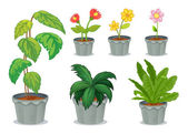 Six pots with plants — Stock Vector