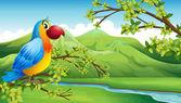 A colorful bird near the mountain — Stock Vector