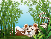 A tiger in a bamboo forest — Stock Vector