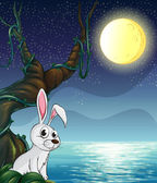 A rabbit and the bright full moon — Stock Vector