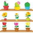 Wooden shelves with ornamental plants — Stock Vector