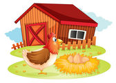 A hen and her eggs at the backyard — Stock Vector