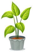 A pot of green plant — Stock Vector
