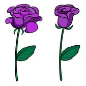 Two purple roses — Stock Vector